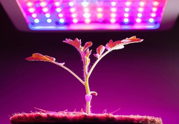 هر آنچه باید از LED مخصوص رشد گیاه بدانید!